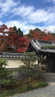 空,鮮やか,樹木,秋空,お寺の秋