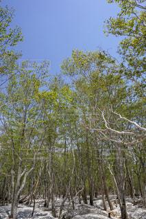 フォレスト内のツリーの写真・画像素材[1691496]