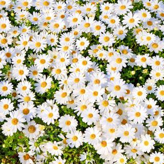 花の写真・画像素材[1972643]