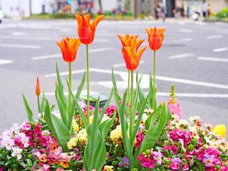 花の写真・画像素材[2040727]