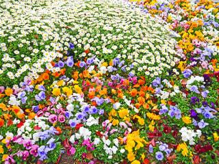 花の写真・画像素材[2040740]