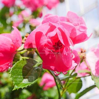 花の写真・画像素材[2140608]