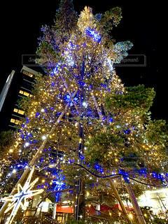 クリスマスの写真・画像素材[2824428]