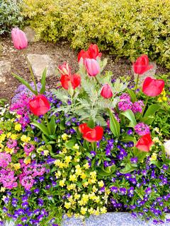 花の写真・画像素材[3072498]