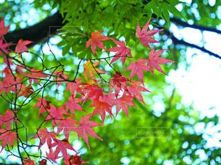 秋の気配の写真・画像素材[3718203]