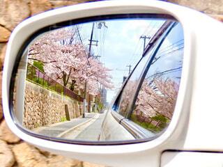 ミラー越しの桜の写真・画像素材[4302494]