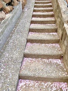 桜の花びらの写真・画像素材[4318588]
