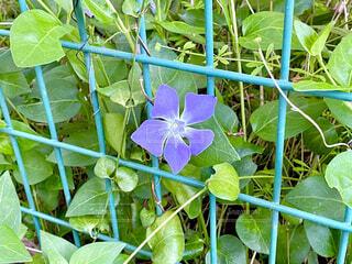 一輪の花の写真・画像素材[4327174]