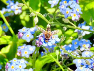 花と蜂の写真・画像素材[4347638]