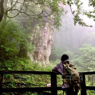 縄文杉と見つめ合うの写真・画像素材[791088]
