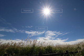 自然,空,太陽,雲,青,山,すすき