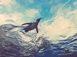 空飛ぶペンギンの写真・画像素材[867677]