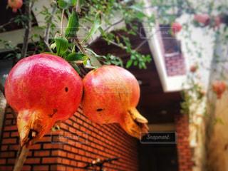 フルーツ,韓国,秋の味覚,ざくろ,実りの秋,家の庭
