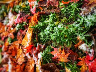 秋色絨毯と初雪の写真・画像素材[878305]