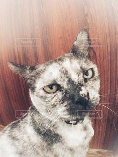 見つめる猫の写真・画像素材[1141270]