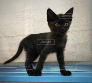 窓の前に座って黒い猫 - No.1197997