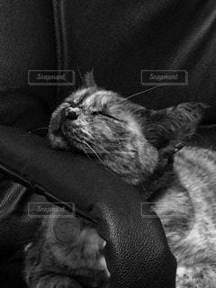眠る猫の写真・画像素材[1238730]