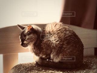 うたた寝する愛猫の写真・画像素材[1270458]