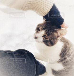 猫ちゃんをなでなで♪の写真・画像素材[1808500]