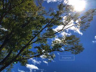 秋空と樹木と太陽の写真・画像素材[2476312]