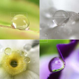 雨雫をまとった花たち。の写真・画像素材[2482679]