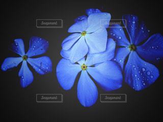 しずくと花と。の写真・画像素材[3018549]