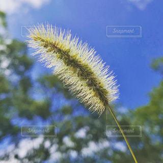 自然,空,屋外,青空,草,猫じゃらし,雑草,秋空,草木,秋の空