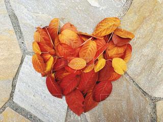 近くの花のアップの写真・画像素材[1650408]
