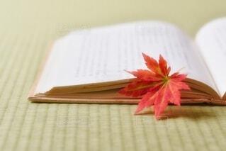 読書の秋の写真・画像素材[3800639]