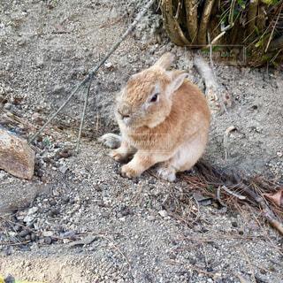 地面に横になっている小さな茶色の動物の写真・画像素材[722271]