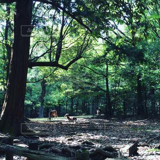 雑木林の木の写真・画像素材[793525]