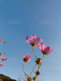 空,花,カラフル,樹木,景観