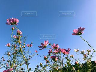 空,花,カラフル,景観