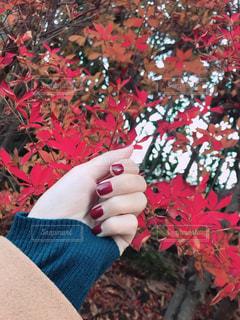赤い花を持っている手の写真・画像素材[909763]