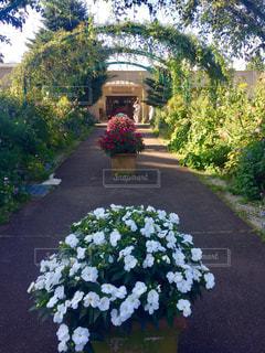 近くのフラワー ガーデンの写真・画像素材[757621]