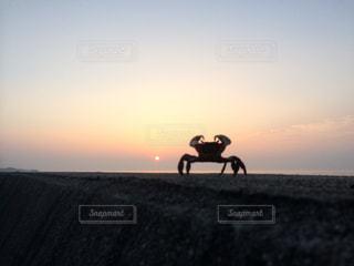 背景の夕日とビーチで馬に乗る人の写真・画像素材[970975]