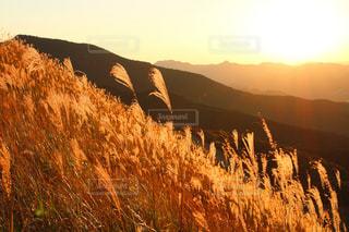 背景の山と木の写真・画像素材[763462]