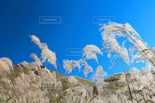 背景の山と木の写真・画像素材[1465534]