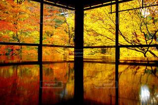 紅葉,京都,瑠璃光院,特別拝観