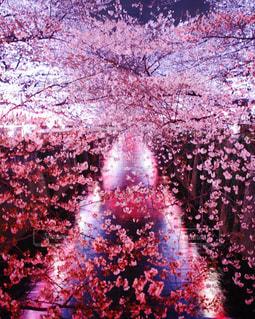 空に花火のグループの写真・画像素材[1122095]