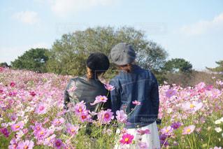 空,花,コスモス,後ろ姿,福岡,姉妹,コスモス畑,pink,海の中道海浜公園,genic