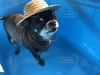 青い帽子をかぶった犬の写真・画像素材[737609]