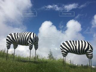 夏の思い出,美ヶ原高原美術館,PassMe,アートな美術館,長野満喫,青空とシマウマ
