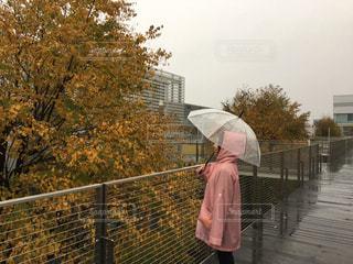 秋の雨の写真・画像素材[851466]