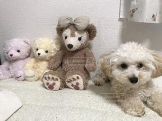 犬の隣に座っているぬいぐるみの動物のグループの写真・画像素材[1186554]