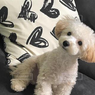 動物のぬいぐるみの横に座っている犬の写真・画像素材[1186571]