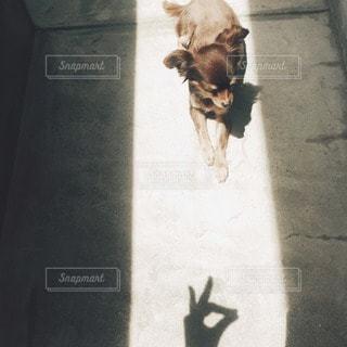 犬の写真・画像素材[11515]