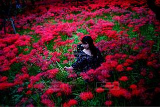 彼岸花畑に佇む少女の写真・画像素材[787174]