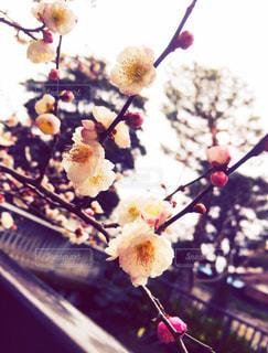 近くの花のアップ - No.770320