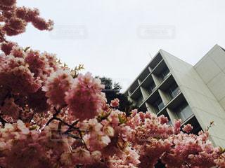 建物の前にピンクの花で一杯の花瓶 - No.856126